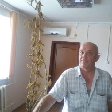 Результат посева в Приморье